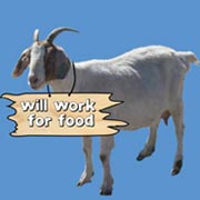 goat_sign-new