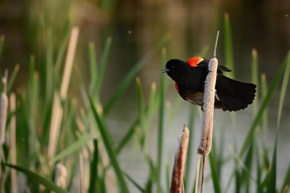 Bird flickr