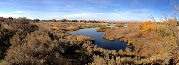 Hyatt Wetlands